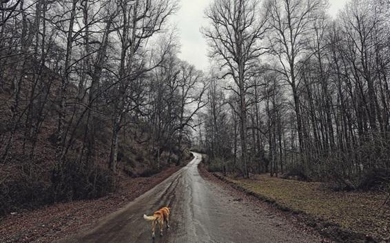 Wallpaper Trees, wet road, dog