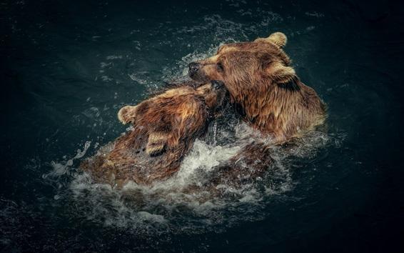 Fondos de pantalla Dos osos marrones juguetones en agua