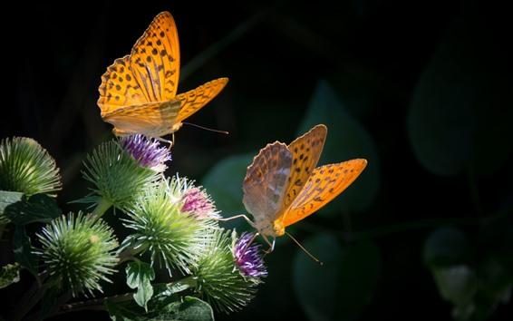 Papéis de Parede Duas borboletas, flores, fundo preto