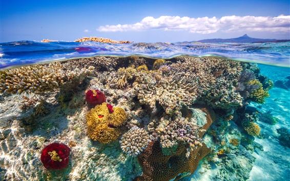 Fond d'écran Sous l'eau, mer, corail