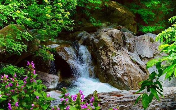 Papéis de Parede Cachoeira, rochas, árvores, flores