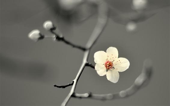 Fondos de pantalla Flor blanca, ramitas, borrosa