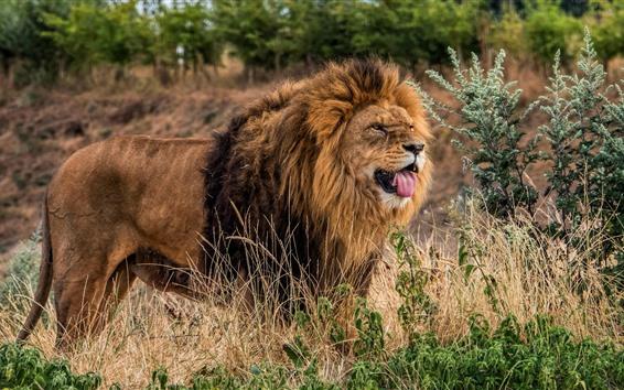 Fonds Décran Faune Lion Buissons 2560x1440 Qhd Image