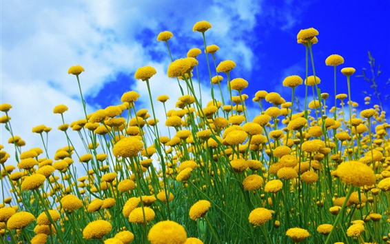 Wallpaper Yellow flowers, blue sky