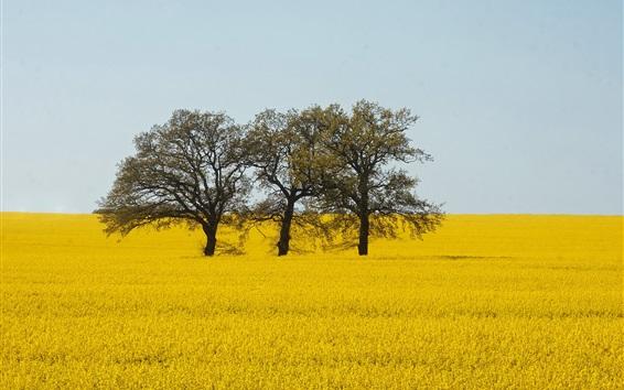 Wallpaper Yellow world, rapeseed flowers, trees