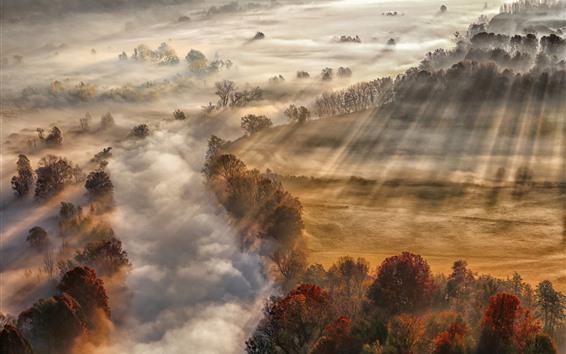 Hintergrundbilder Herbst, Nebel, Bäume, Morgen, Sonnenstrahlen