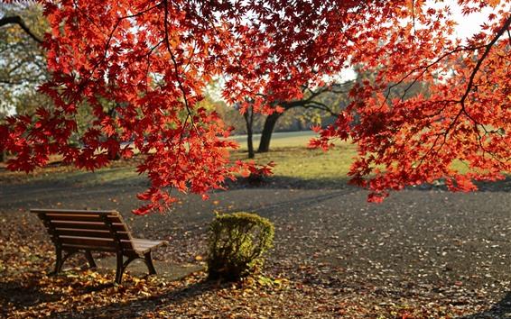 Wallpaper Autumn, park, red maple leaves