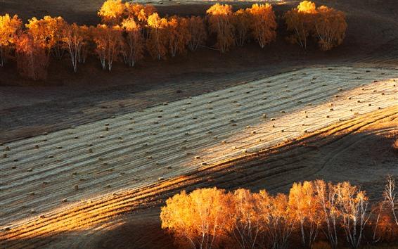 Wallpaper Autumn, trees, fields