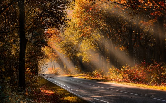 Wallpaper Autumn, trees, fog, road, sunshine