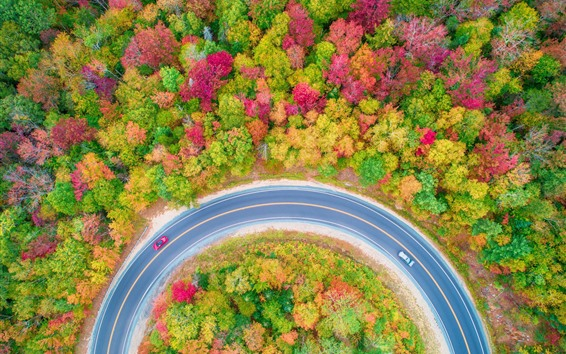 Wallpaper Autumn, trees, forest, road, car, top view