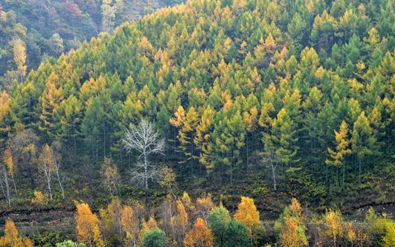 Wallpaper Autumn, trees, mountains, nature