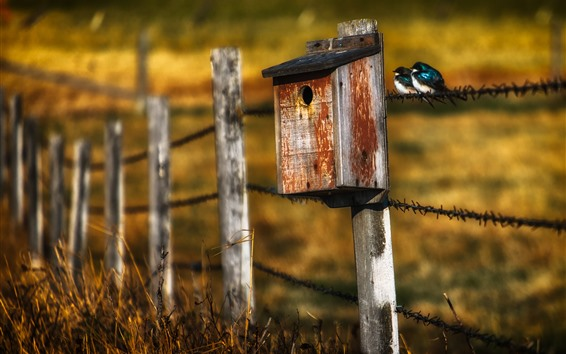 Wallpaper Birdhouse, fence, grass, two birds