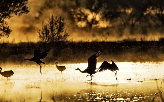 Wallpaper Birds, lake, morning, sunshine