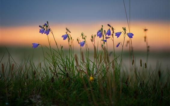 Wallpaper Blue flowers, grass, bokeh