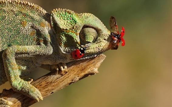 Papéis de Parede Inseto camaleão captura