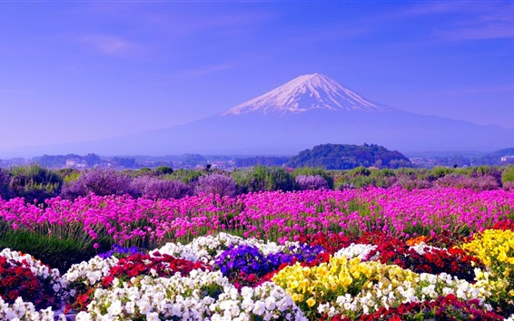 Wallpaper Colorful flowers, spring, Mount Fuji, Japan