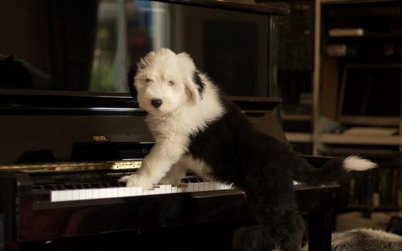 Обои Симпатичная собака играет на пианино, смешное животное