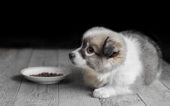 Обои Симпатичный щенок, пол, боке