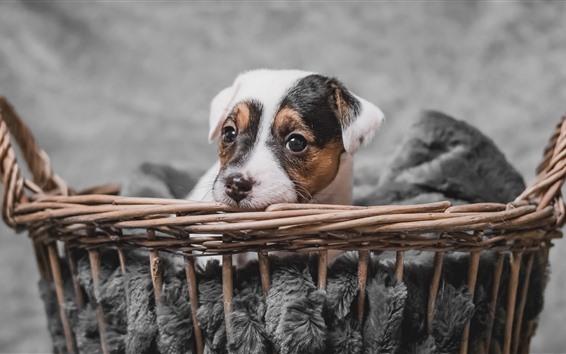 Papéis de Parede Resto de cachorro fofo, cesta