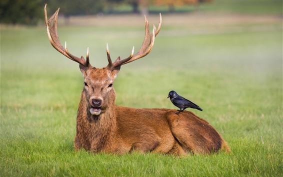 Wallpaper Deer and bird, friends, grass