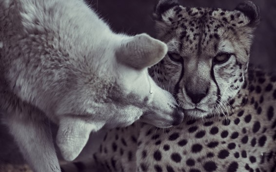 Wallpaper Dog and cheetah, friendship