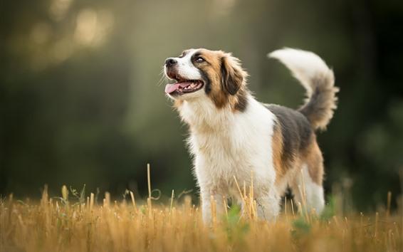 Обои Собака, трава, боке