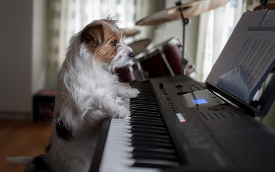 Wallpaper Dog play piano, funny animal