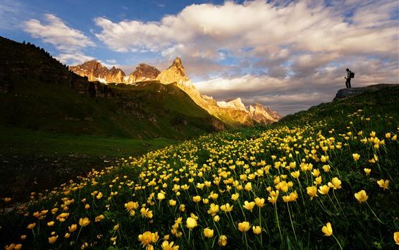 Fond d'écran Dolomites, montagnes, fleurs jaunes, paysage naturel