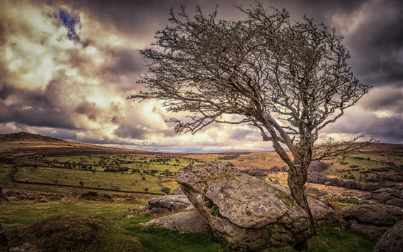 Fondos de pantalla Inglaterra, Devon, árbol solitario, piedras, nubes