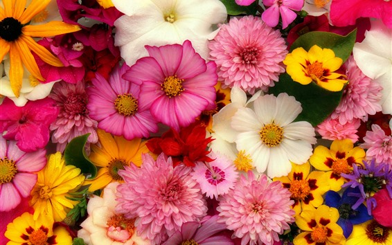 Wallpaper Flowers Background Many Kinds Pink 5120x2880 Uhd 5k