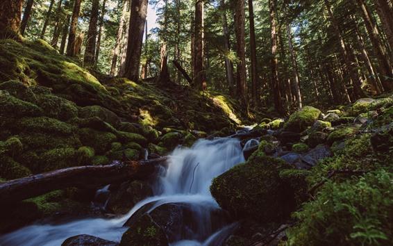 Wallpaper Forest, trees, moss, creek