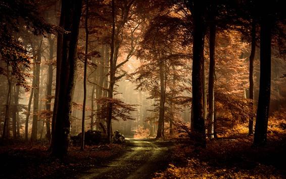 Fondos de pantalla Bosque, árboles, luz del sol, camino, otoño