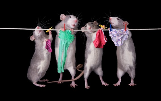 Wallpaper Four rats working