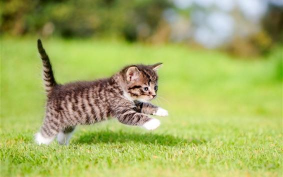 Обои Пушистый котенок играет в траве