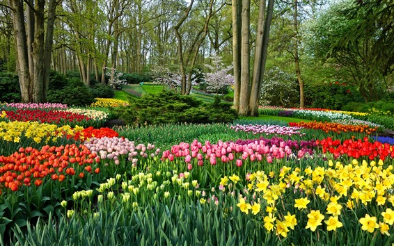 Wallpaper Garden flowers, daffodils and tulips