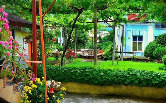 Fond d'écran Jardin, vignes, fleurs, vert, été