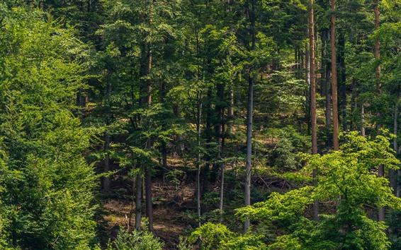 Papéis de Parede Alemanha, floresta negra, verde, verão