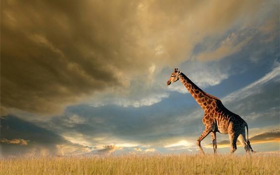 Обои Жираф, природа, луга