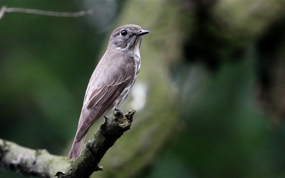 Papéis de Parede Pássaro de penas cinza