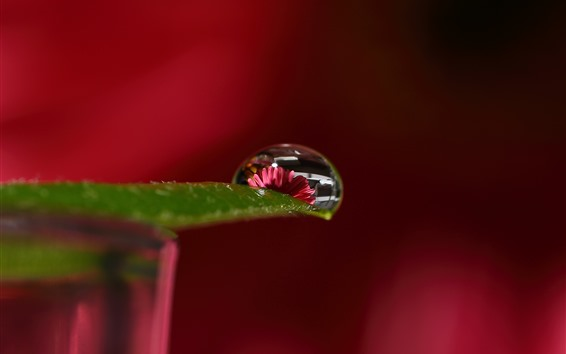 Wallpaper Green leaf, water droplet, flower