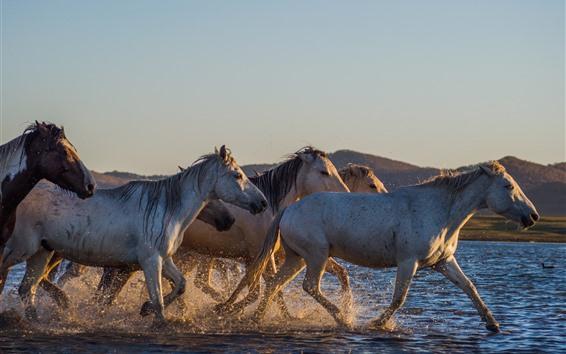 Wallpaper Horses walking in the water