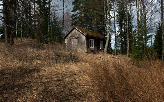 Wallpaper Hut, trees, grass, nature