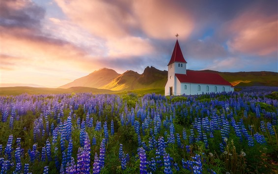 Papéis de Parede Islândia, igreja, flores azuis, primavera