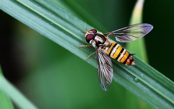 Papéis de Parede Inseto, abelha, folha verde