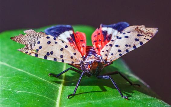 Обои Насекомое, крылья, зеленый лист