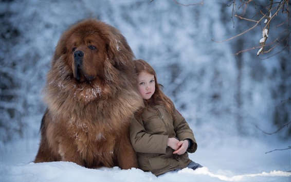 Papéis de Parede Menina e Mastim tibetano, neve, inverno