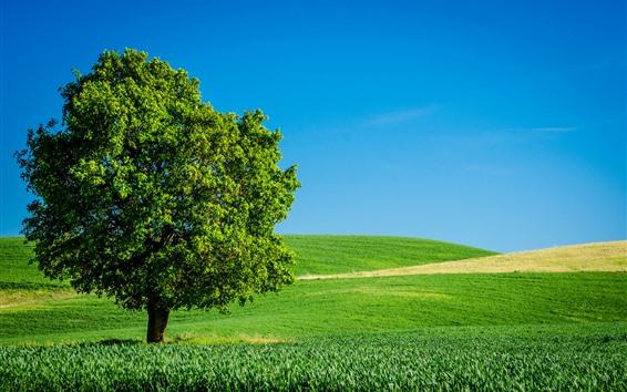 Wallpaper Lonely tree, green fields, summer