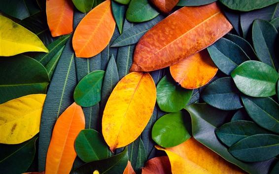 壁纸 许多叶子,绿色和橙色