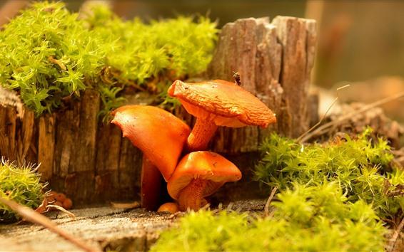 Wallpaper Mushrooms, orange color