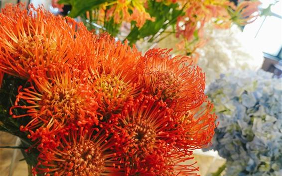 Papéis de Parede Flores alaranjadas, pétalas, crisântemo